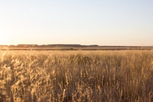 The call of the Veld